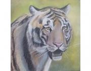 tigr.